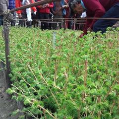 ついにネパール奥地で植栽開始!其の3