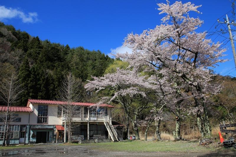 桜もりの学校