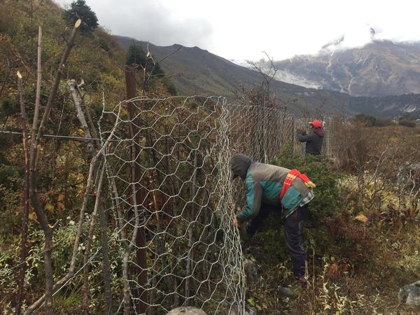 Mesh Wire Fence2.jpg
