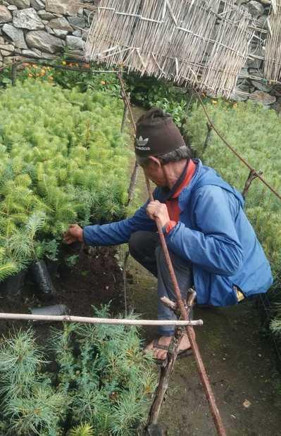 Plantation Photo 2.jpg