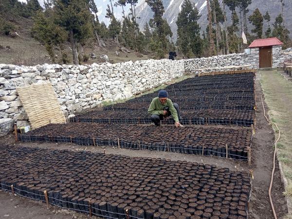 Taking Care of New seedlings 2020.jpg