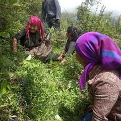 サマ村 森林プロジェクト