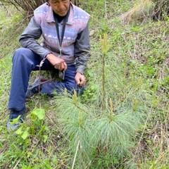 サマ村森林プロジェクト レポート
